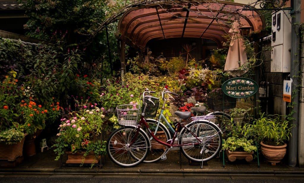 kyoto kolo