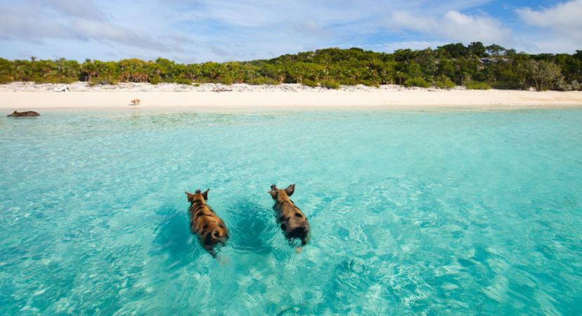 Gdje je toplo u siječnju? Bahami
