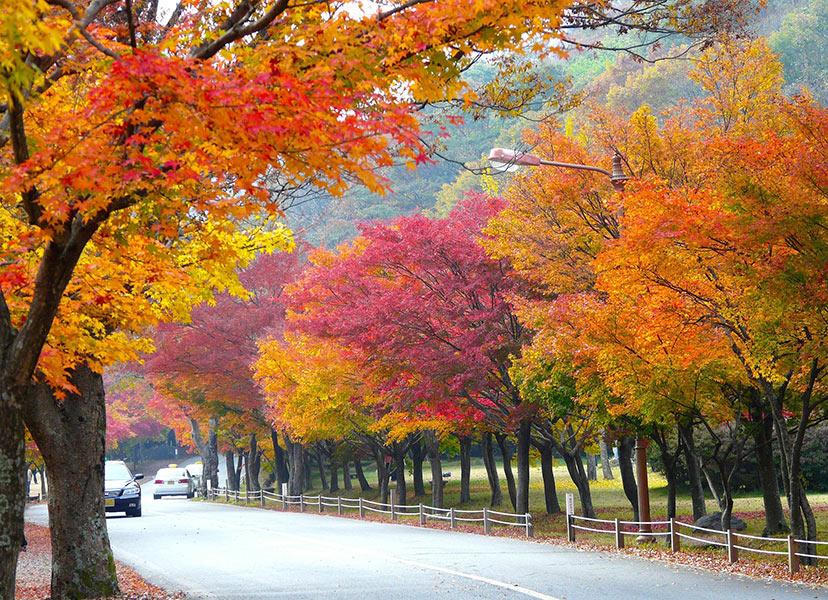Južna Koreja: Narodni park Naejangsan