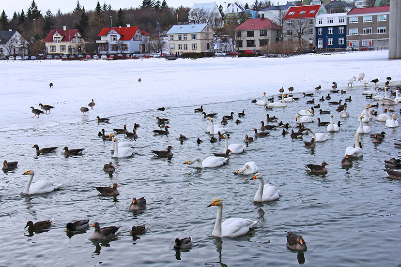 Kam za novo leto? Reykjavik.