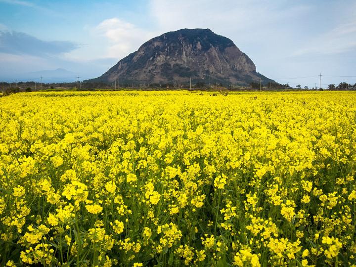 Otok Jeju