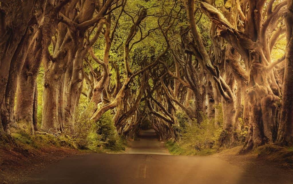 trees 3464777 1280