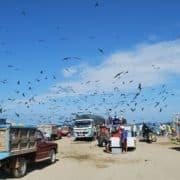 Ekvador pustolovina i odmor zajedno 3