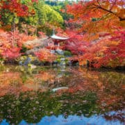 Japonska 7