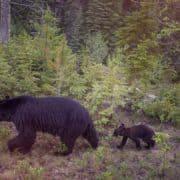 Narodni parki zahodne kanade 13