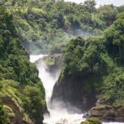 Opazovanje goril v ugandi 6