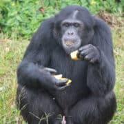 Opazovanje goril v ugandi 7