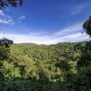 Po stopinjah goril v ruandi in ugandi 3