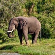 Po stopinjah goril v ruandi in ugandi 6