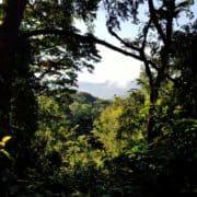 Po stopinjah goril v ruandi in ugandi 9