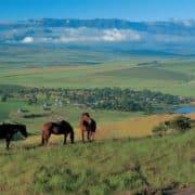 Raziskovanje južne afrike 16