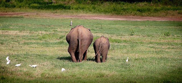 15 razlogov zakaj na srilanko sloni