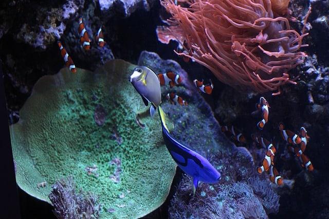 Noc v muzeju monterey akvarij