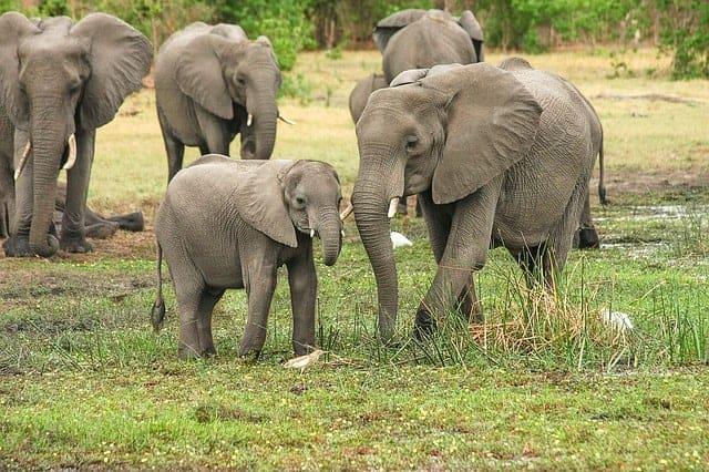 elephant 2923917 640