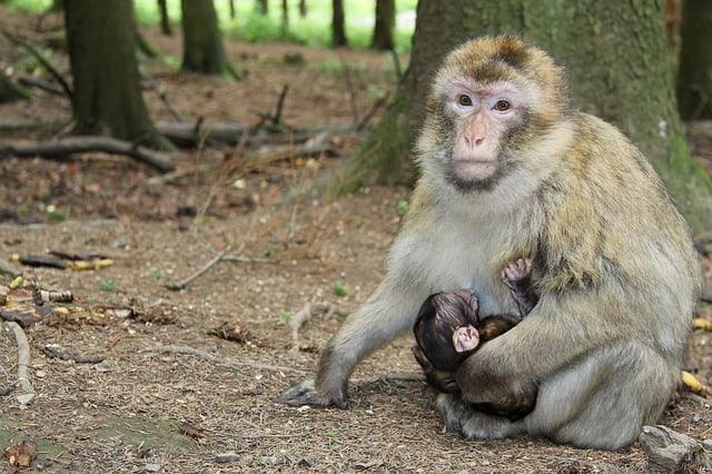 monkey 2504308 640