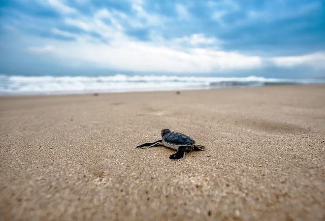 turtle 2201433 640