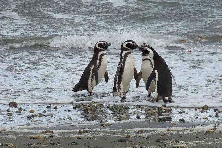 Punta Arenas, Čile