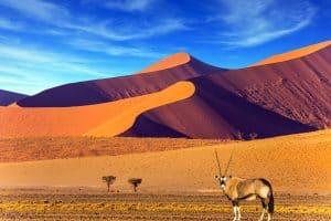 Porocno-potovanje-namibija1
