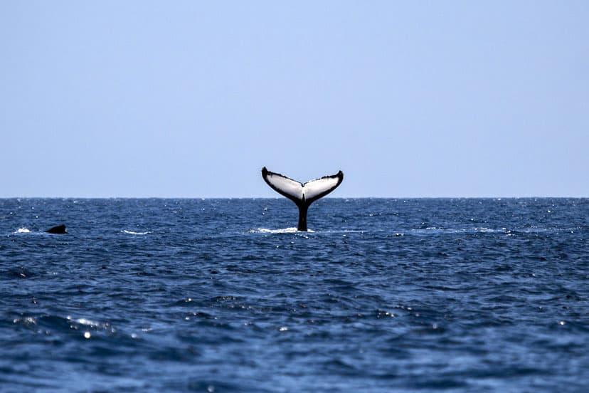 san diego kitovi
