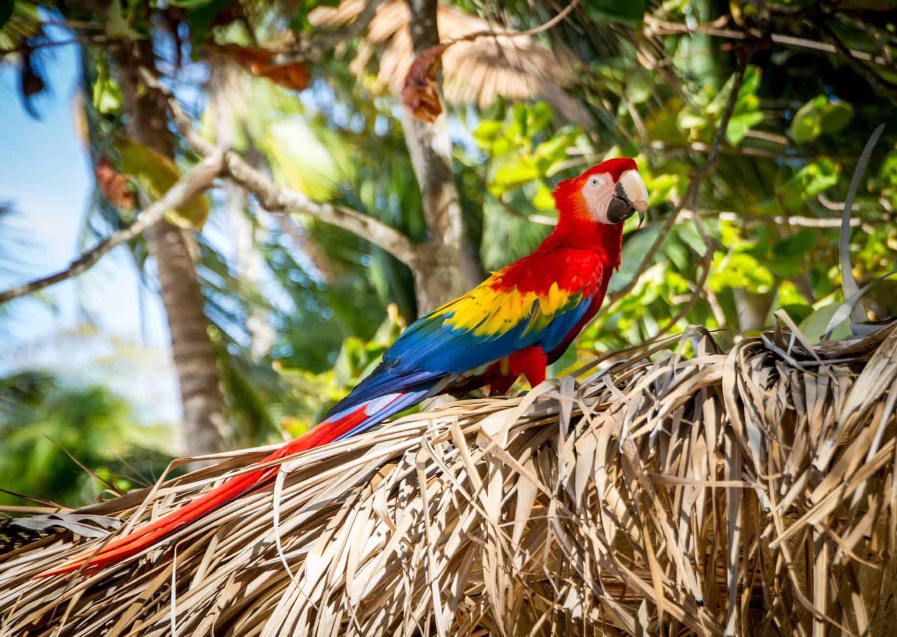 Kostarika - solo potovanja