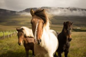 islandija nomago travel prvomajske 9