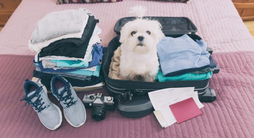 Kako putovati s psom?