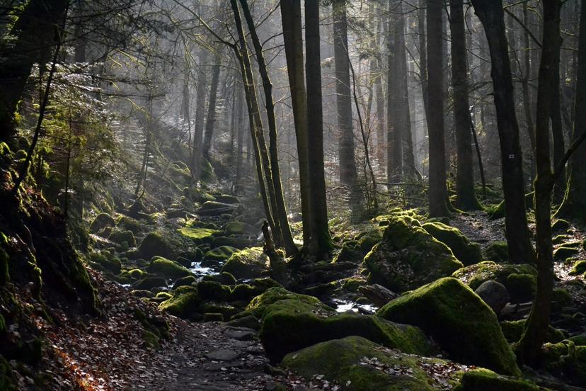 Njemačka: Crna šuma