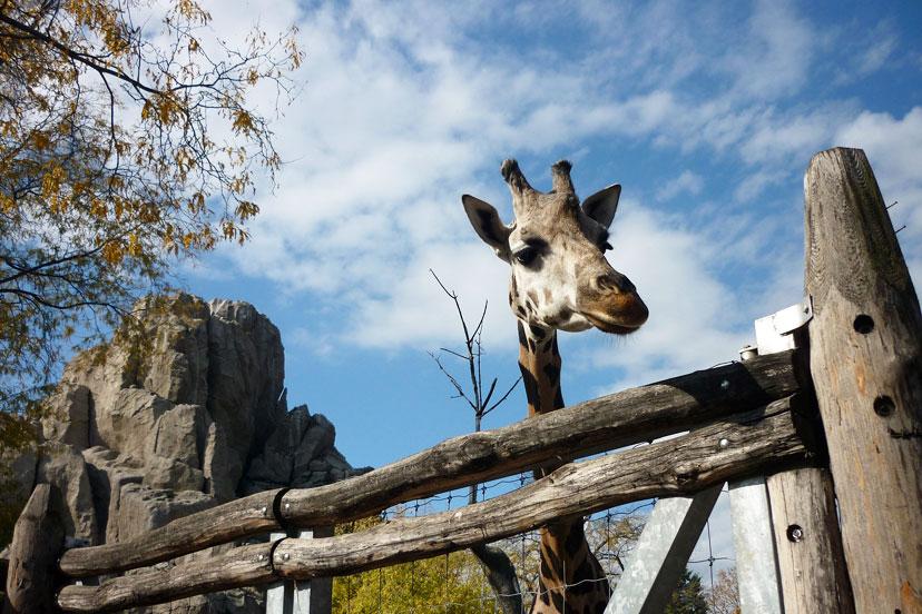 Zoo, Budimpešta, InterCity