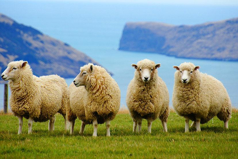 e-viza za Novi Zeland