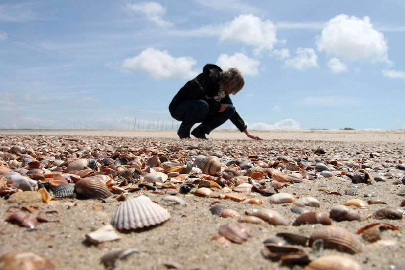 Zašto ne biste trebali s plaža uzimati pijesak, školjke i kamenje?