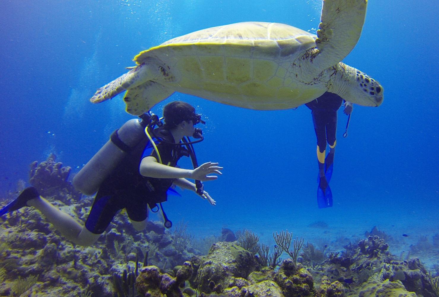 Najbolje plaže prema horoskopu, Meksiko, ronjenje