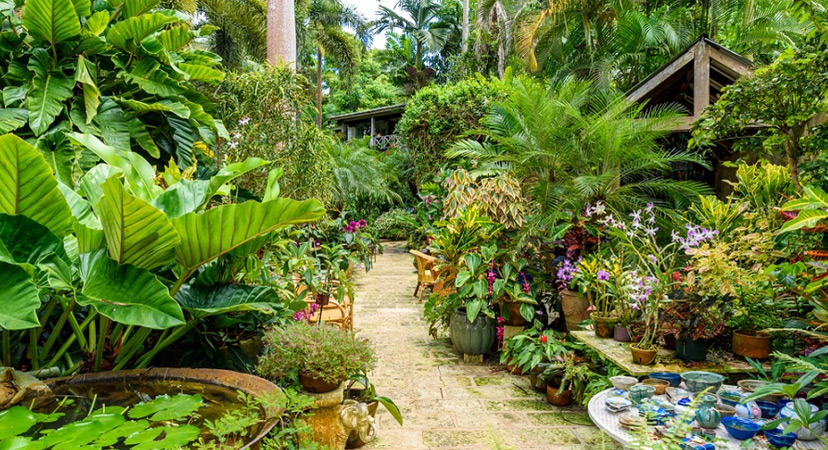 Putovanje na Rihannin Barbados, Hunteovi vrtovi