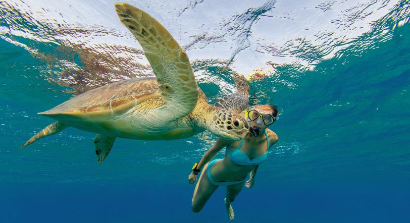 Putovanje na Rihannin Barbados, kornjače