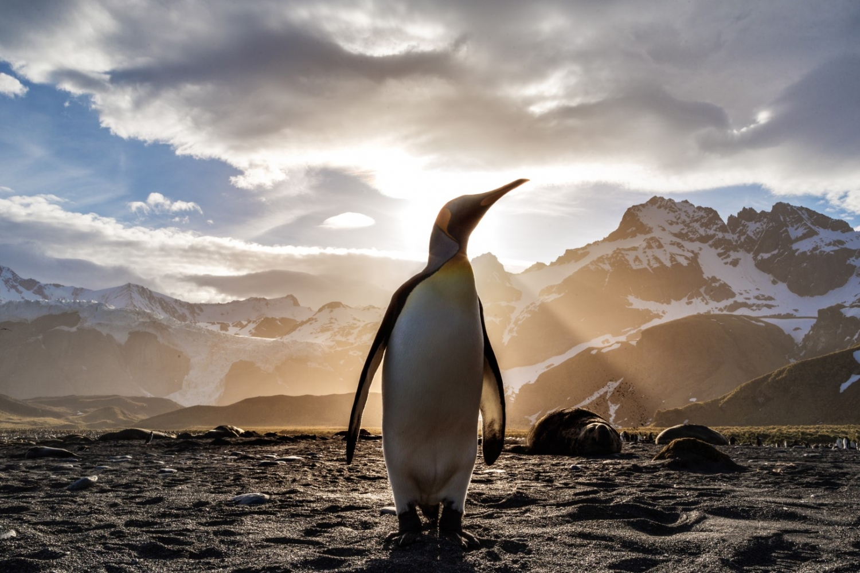 Gdje možete vidjeti pingvine?