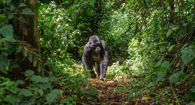 10 najboljih destinacija za posjetiti u 2019. godini, Uganda