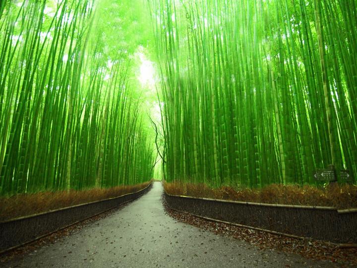 50 najljepših destinacija u Aziji, Arashiyama, Kyoto,Japan