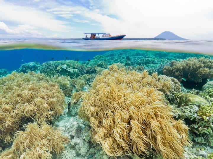 50 najljepših destinacija u Aziji, Bunaken Marine Park, Indonezija