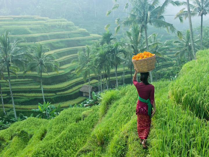 50 najljepših destinacija u Aziji, Ubud, Bali, Indonezija