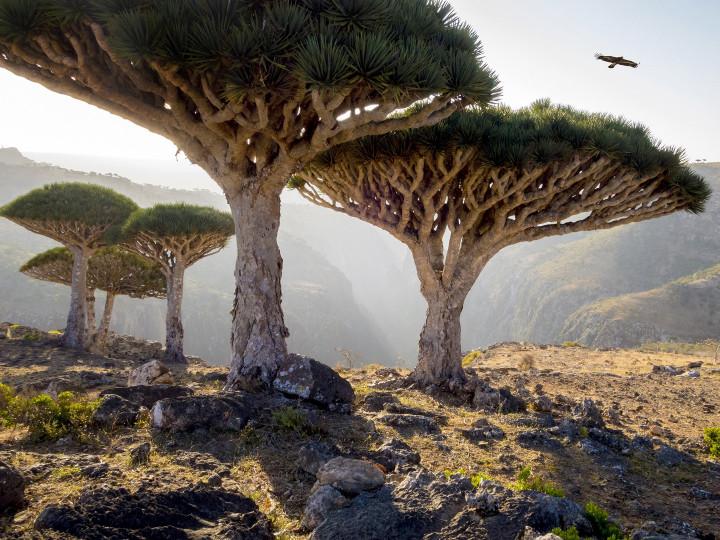 50 najljepših destinacija u Aziji, Socotra, Jemen