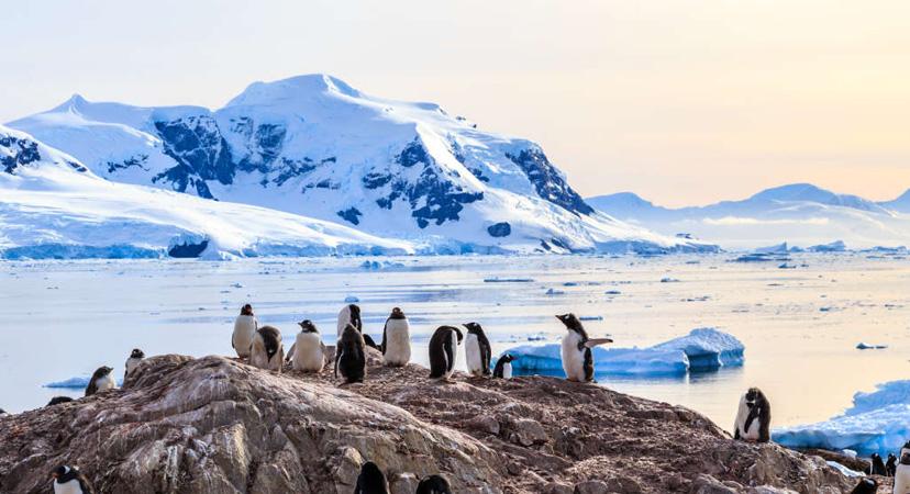 Gdje možete vidjeti pingvine? Antarktika
