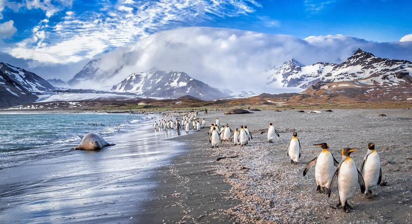 Gdje možete vidjeti pingvine? Južna Georgia width=
