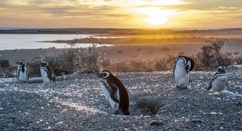 Gdje možete vidjeti pingvine? Argentina