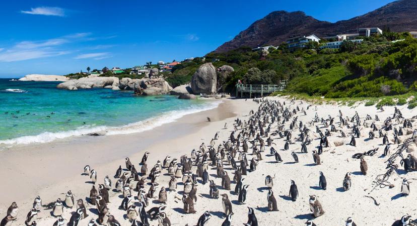 Gdje možete vidjeti pingvine? Južnoafrička Republika