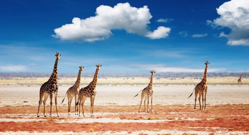 jeftine avio karte za Namibiju