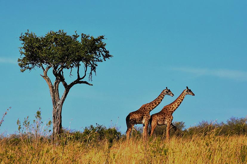 Tanzanija, živali, sončni zahodi