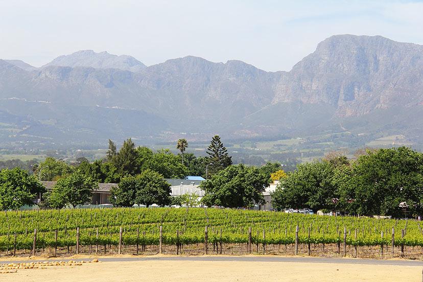 Stellenbosch vinska pot, Južna Afrika